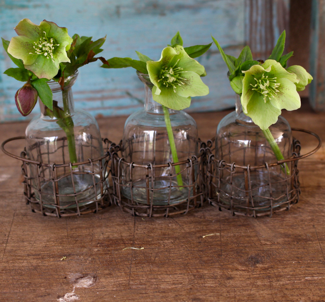 Get the look at Vintage american Home. Lenten roses from my backyard.