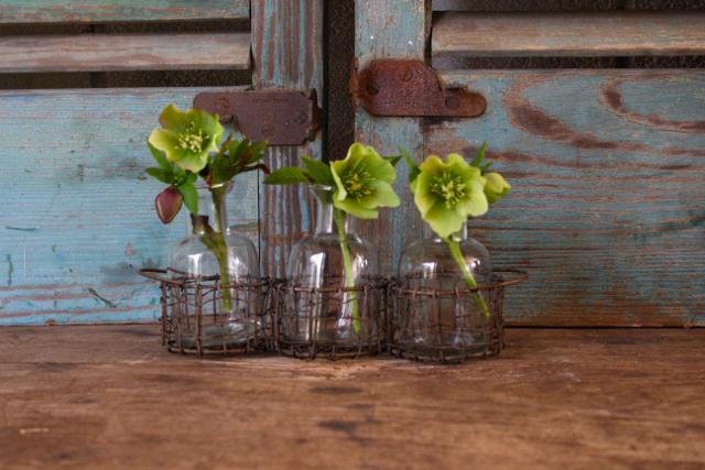 Lenten roses from my garden in a bottle vase -at Vintage American Home.com
