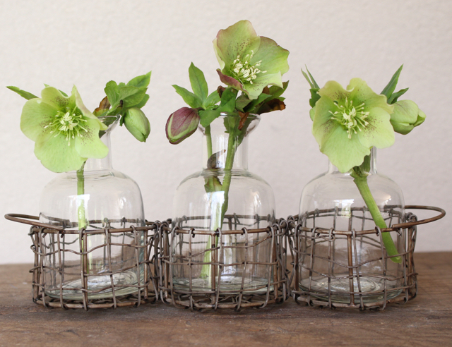 Basket with blossoms in bottles at Vintage american Home.com Lenten roses from my garden.